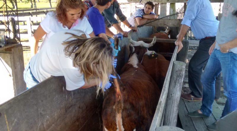 Senasa: Nuevo sistema por internet de reacreditación en programas de sanidad animal