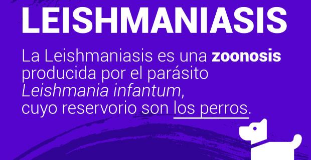 Leishmaniasis: una enfermedad prevenible